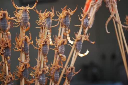Many of us have a cognitive bias toward eating scorpions!