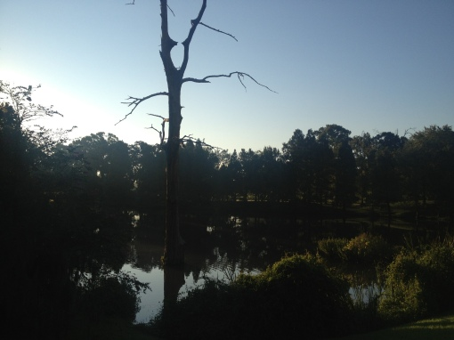 Reflections of daybreak.