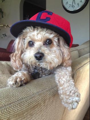 "Persona Name: Tom ""The Brewdog"" Pinternick (primary persona)"