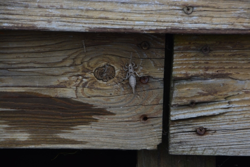 Bug Case