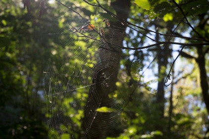 A spider web has several external risks.