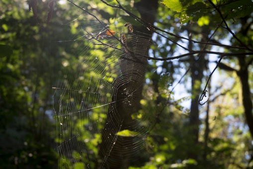 A spider web has several external risks.