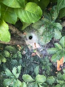Spider web!